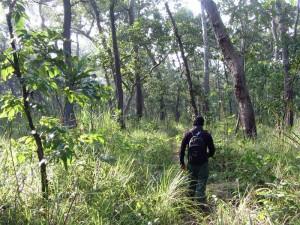 Dschungelwanderung im Chitwan Nationalpark während 2 Wochen Nepal
