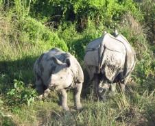 Dschungelabenteuer im Chitwan Nationalpark