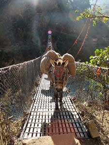 Bepackter Esel auf Hängebrücke