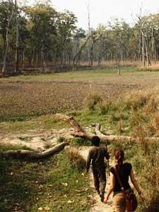 Spannende Dschungelwanderung während Ihres Aufenthalts im Nationalpark