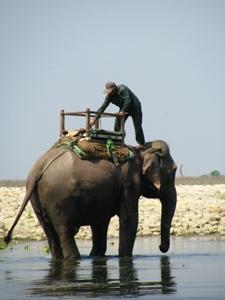 Elefant mit Pfleger beim Chitwan