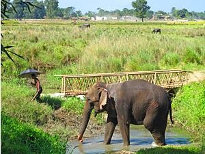 Elefant watet durch Fluss beim Chitwan Nationalpark