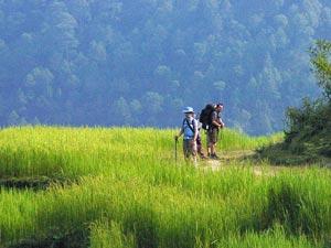 Wanderer in den Reisfeldern bei Tadapani