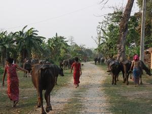 Lokale Straße bei Chitwan