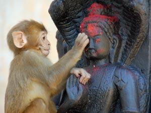 Ein junger Affe am Swayambunath-Tempel in Kathmandu