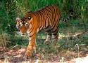 Alle tijd voor tijgers en thali's