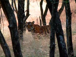 De tijger en het fort
