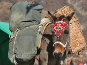 bhutan hike bepakte ezel