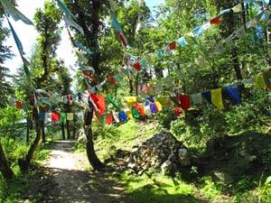 dharamsala wandeling