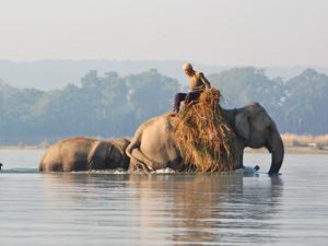india nepal olifanten wild chitwan