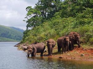 periyar olifanten thekkady india