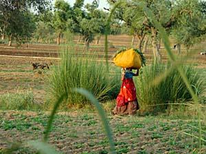 mandawa india platteland