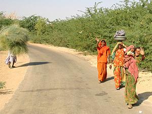 rondreis rajasthan platteland