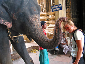 tanjore tempel olifant