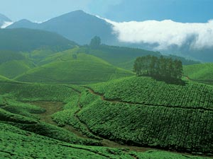 india theeplantages kerala