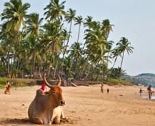 Exotische stranden van Goa