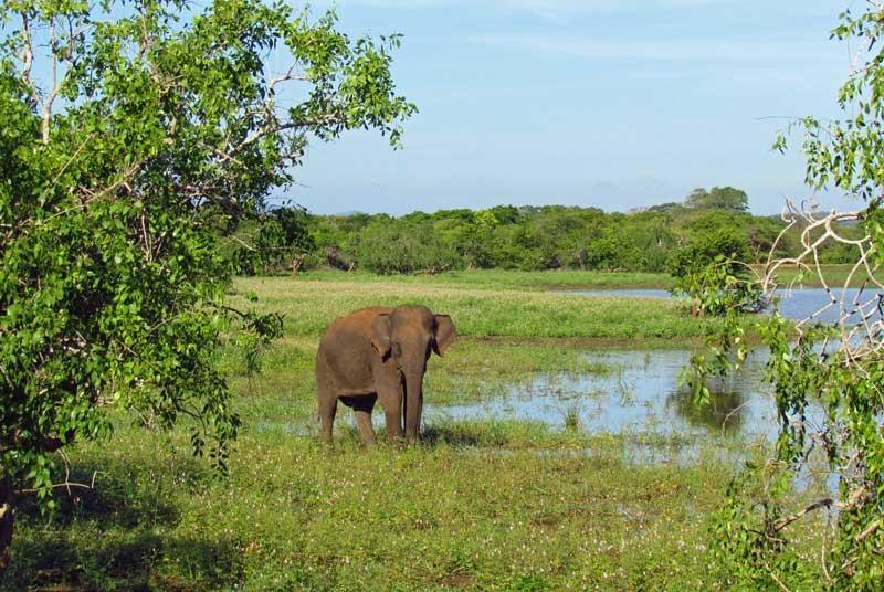 Olifant - Zuid-India vakantie