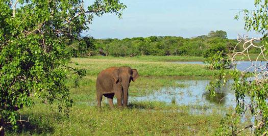 Zuid-India vakantie - olifant