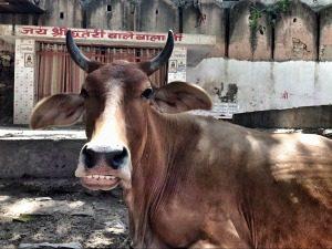 India koe