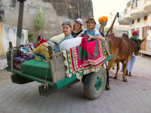 Rajasthan rondreis ossenkar