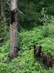 beren Clearwater Canada