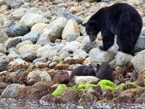 beren kijken canada