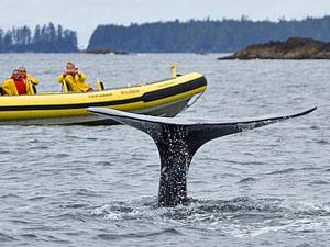 familiereis Canada met kinderen - walvis spotten