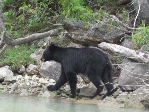 zwarte-beer-canada