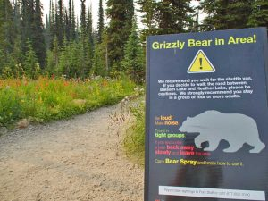 Canada bordje beren