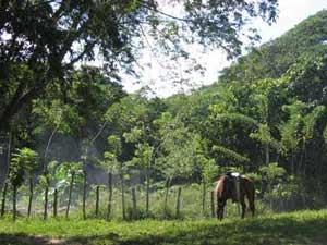 Cuba reis - omgeving Camaguey