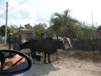 op reis naar Cuba, onderweg
