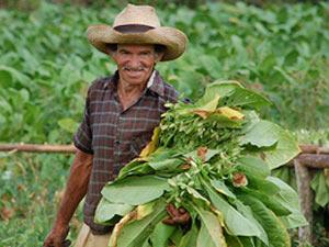 Tabaksheuvels bezoeken in Cuba