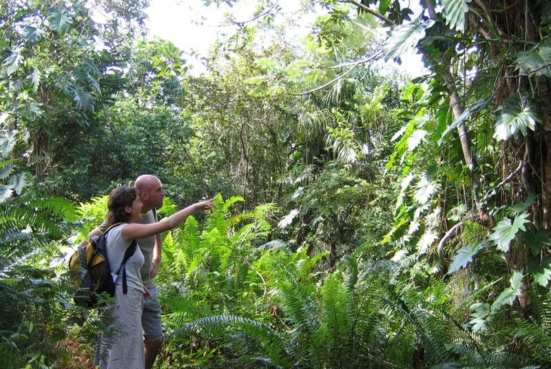 Jungle tijdens vakantie Cuba