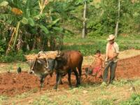 Cuba Vinales platteland