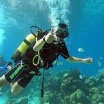duiker-en-koraalen-visjes