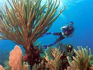 Snorkelen en duiken in Cuba