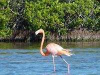 Playa Larga natuurpark