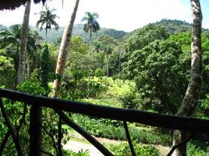 Las Terrazas: uitzicht ecohotel