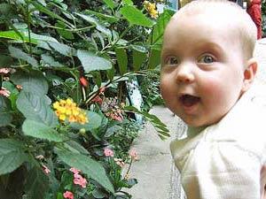 cameron highlands vlindertuin baby maleisie
