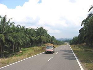 maleisie kidsreis autoweg