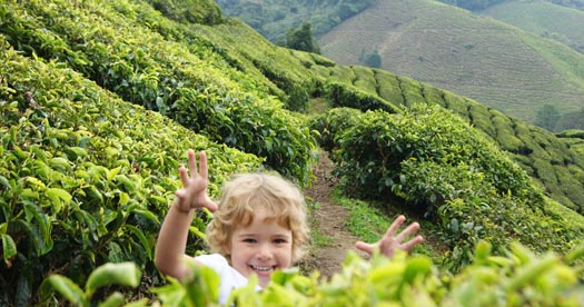 Cameron Highlands - rondreizen Maleisie