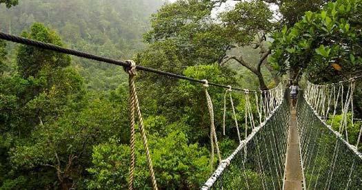 Maleisie reizen - canopy tour