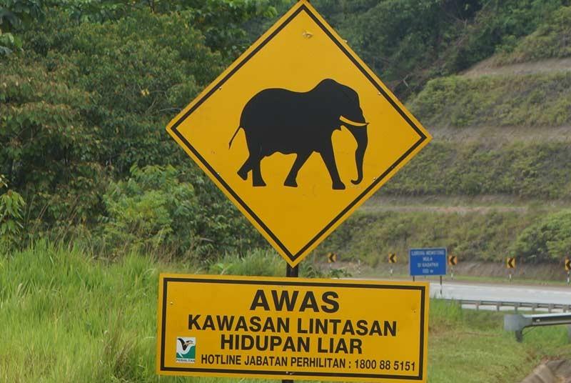 Pas op wilde olifanten - Maleisie