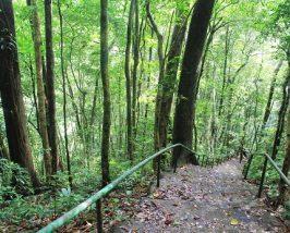 Trekking door Bach Ma National Park - Vietnam