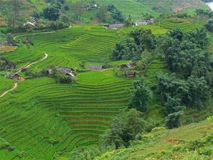 Reisverslagen Vietnam - Sapa rijstvelden