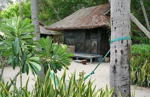 vietnam palmeneiland