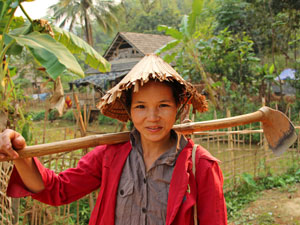 Vietnam-reis - Platteland