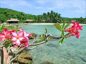vietnam reis strand palmeneiland