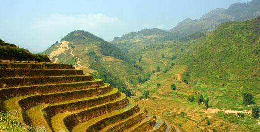 Vietnam vakantie - rijstterras