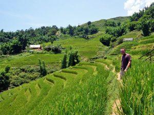 Sapa Vietnam rijstvelden